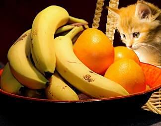 香蕉橙子小猫图片