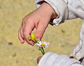 手拿一朵太阳花图片