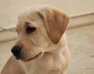 狗不高兴的样子图片